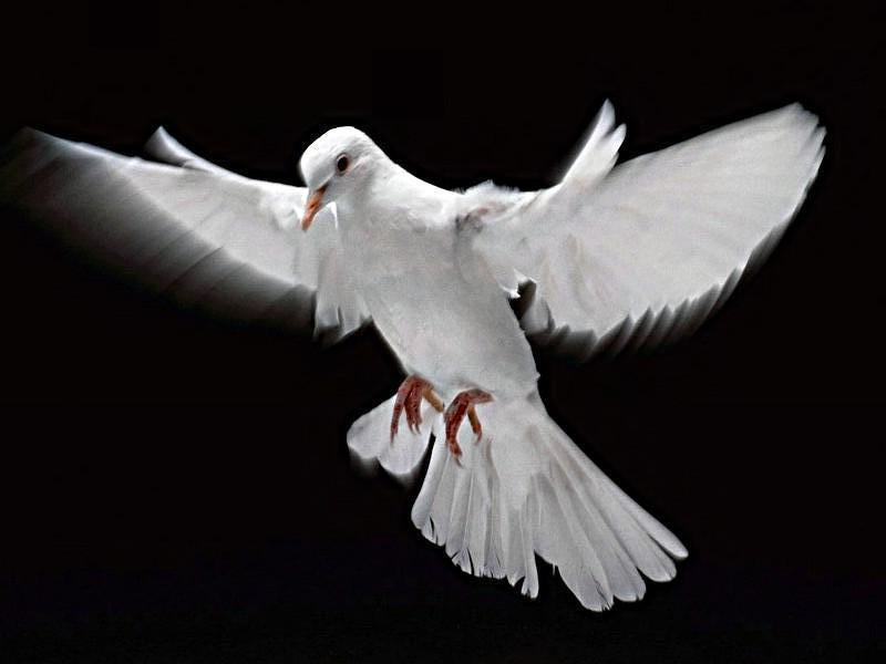 muita-paz-para-voce.jpg